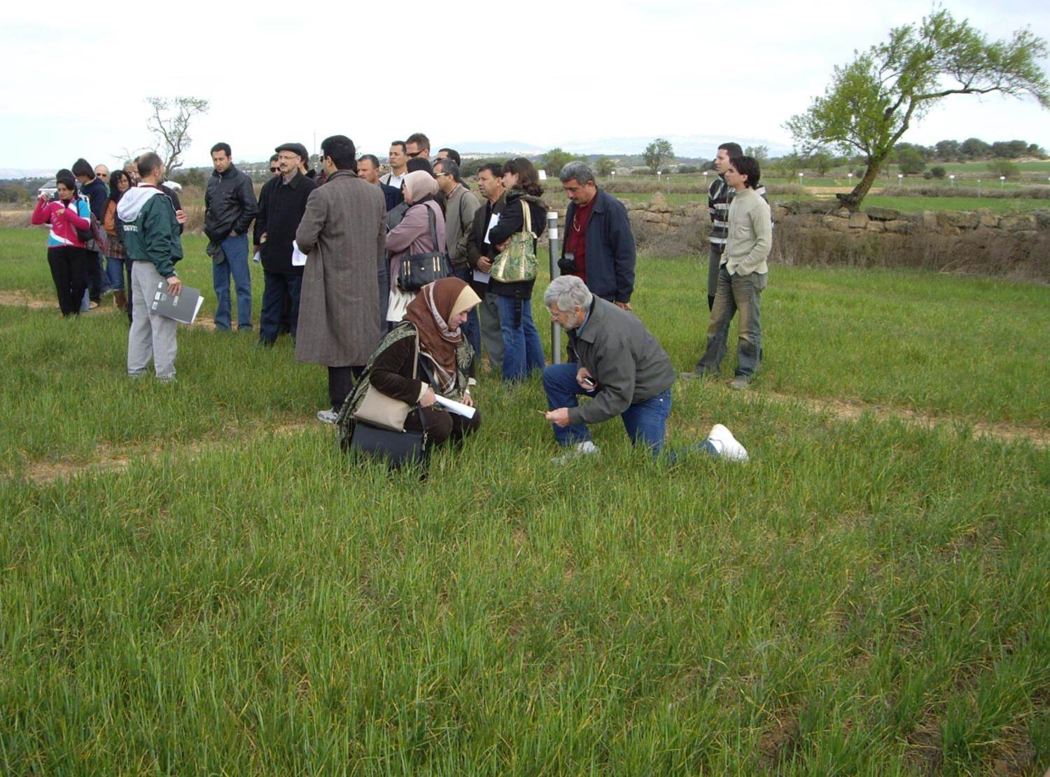 Short-course participants in a no-tillage field of wheat near Zaragoza Spain