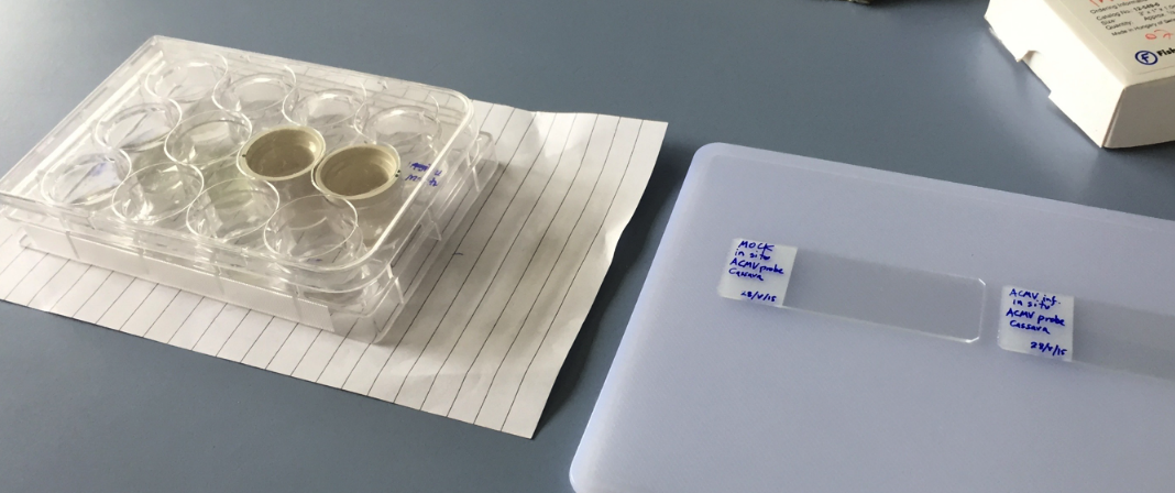 Lab cups on table