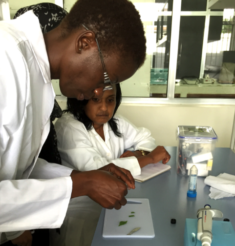 People in lab cutting leaves