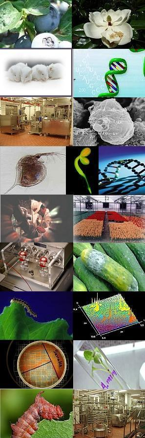 Collage of images of blueberries, magnolia, mice, DNA, ice cream maker, biomathematics, Daphnia, GFP, DNA, machinery, greenhouse flowers, mass spectrometer, diseased cucumbers, tobacco hornworm, NMR, bacteria, seedling in test tube, insect, food processing